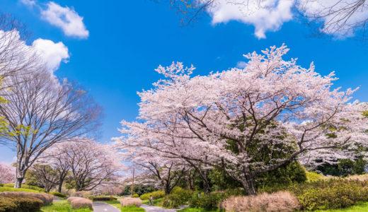 【2019年】立川昭和記念公園の桜の見ごろは?飲食の持ち込みは可能?駐車場はある?
